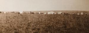 Ferreiras camp 1886